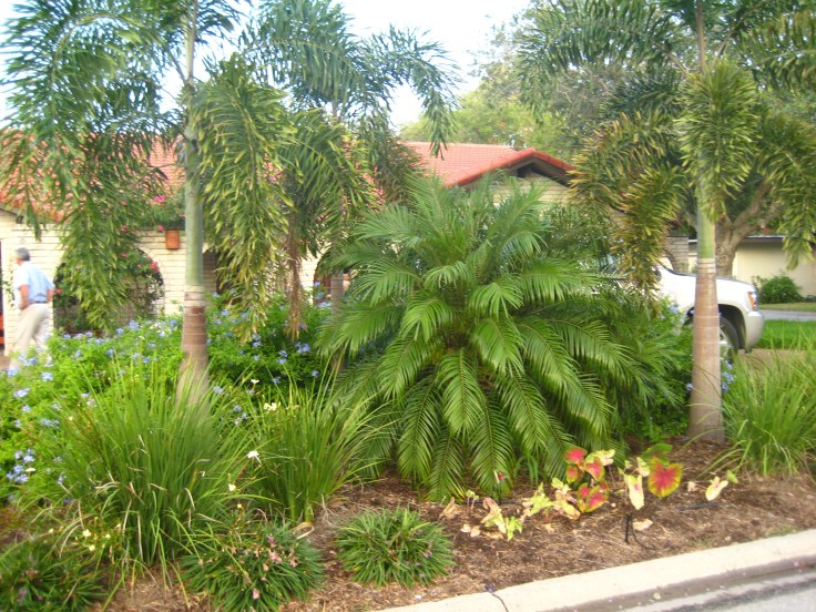 palmlandscape09