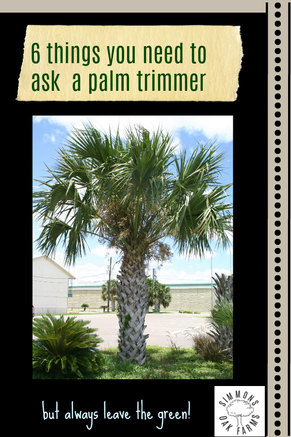 Trimming Palm Trees